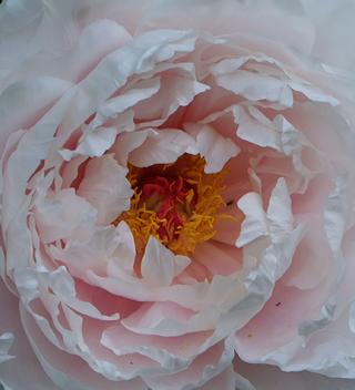 petals.png